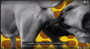 Why Do Dogs Smell Each Other's Butts?