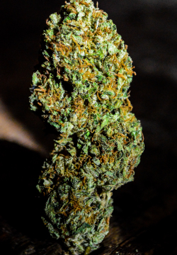 Strain Of The Day Cannalope Kush Don Diva Magazine Get accurate information on strains, review your favorite strains, and much more! strain of the day cannalope kush don